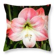Apple Blossom Amaryllis  Throw Pillow