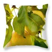 Apple Taste Of Summer 1 Throw Pillow
