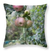 Apple Tree In Allotments In Utrecht Netherlands Throw Pillow