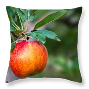 Apples Hanging In Orchard Throw Pillow