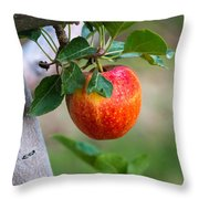 Apples Hanging In The Orchard Throw Pillow