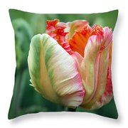 Apricot Parrot Tulip Throw Pillow