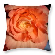 Apricot Pink Tuberous Begonia Throw Pillow