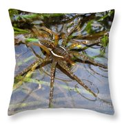 Aquatic Hunting Spider Throw Pillow