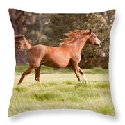 Arabian Horse Running Free Throw Pillow