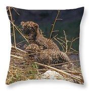 Arabian Leopard Panthera Pardus Cubs Throw Pillow