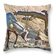 Arabian Oryx In Living Desert In Palm Desert-california Throw Pillow