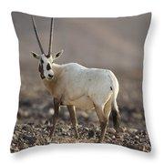 Arabian Oryx Oryx Leucoryx Throw Pillow