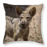 Arabian Wolf Canis Lupus Arabs Throw Pillow