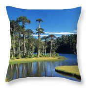Araucaria Forest Chile Throw Pillow