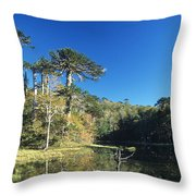 Araucaria Reflections In The Chilean Lake District Throw Pillow