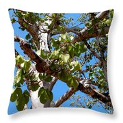 Panama Tree With Flowers Throw Pillow