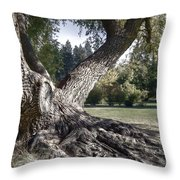 Arboretum Tree Throw Pillow by Daniel Hagerman
