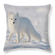Arctic Fox Out On The Pack Ice Throw Pillow