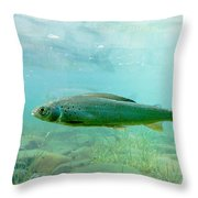 Arctic Grayling Or Thymallus Arcticus Underwater Throw Pillow