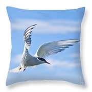 Arctic Tern Sterna Paradisaea In Flight Throw Pillow