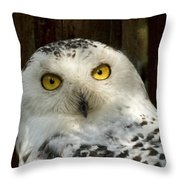 Arctic Visitor Throw Pillow
