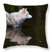 Arctic Wolf In Pond Throw Pillow