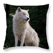 Arctic Wolf On Hill Throw Pillow