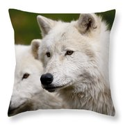 Arctic Wolf Picture 247 Throw Pillow