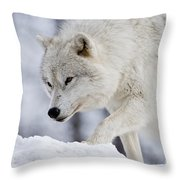 Arctic Wolf Pictures 1054 Throw Pillow