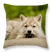Arctic Wolf Pictures 1118 Throw Pillow