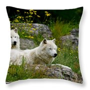 Arctic Wolf Pictures 1128 Throw Pillow