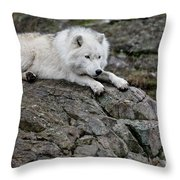 Arctic Wolf Pictures 1142 Throw Pillow