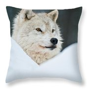 Arctic Wolf Pictures 1144 Throw Pillow