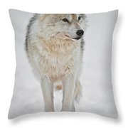 Arctic Wolf Pictures 1146 Throw Pillow