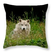 Arctic Wolf Pictures 1172 Throw Pillow