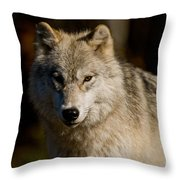 Arctic Wolf Pictures 1224 Throw Pillow