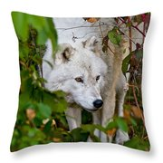 Arctic Wolf Pictures 1228 Throw Pillow