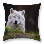 Arctic Wolf Pictures 208 Throw Pillow