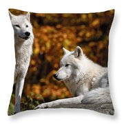 Arctic Wolf Pictures 34 Throw Pillow