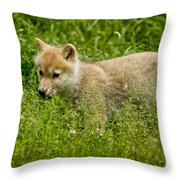 Arctic Wolf Pictures 341 Throw Pillow