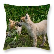 Arctic Wolf Pictures 347 Throw Pillow