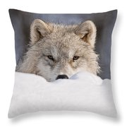 Arctic Wolf Pictures 417 Throw Pillow