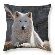 Arctic Wolf Pictures 518 Throw Pillow