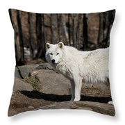 Arctic Wolf Pictures 512 Throw Pillow
