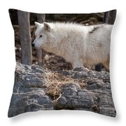 Arctic Wolf Pictures 525 Throw Pillow