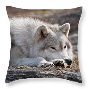Arctic Wolf Pictures 526 Throw Pillow