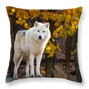 Arctic Wolf Pictures 709 Throw Pillow