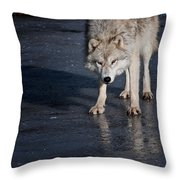 Arctic Wolf Pictures 766 Throw Pillow