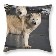 Arctic Wolf Pictures 812 Throw Pillow