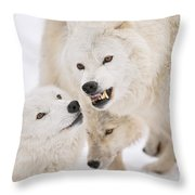 Arctic Wolf Pictures 872 Throw Pillow
