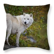 Arctic Wolf Pictures 922 Throw Pillow