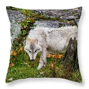 Arctic Wolf Pictures 927 Throw Pillow