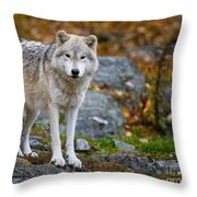 Arctic Wolf Pictures 942 Throw Pillow