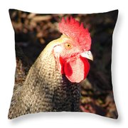 Are You Chicken Throw Pillow